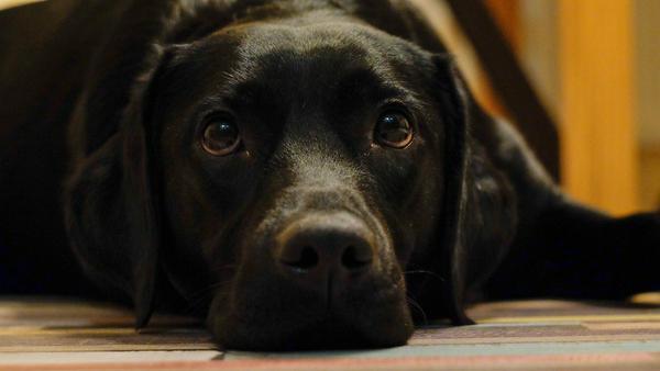 naturalne karmy dla psów essential foods