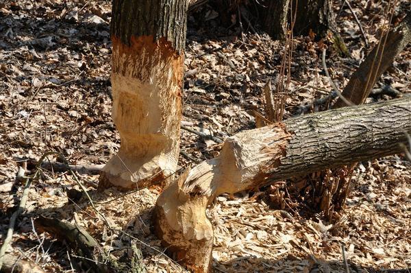wycinka drzew - Bydgoszcz