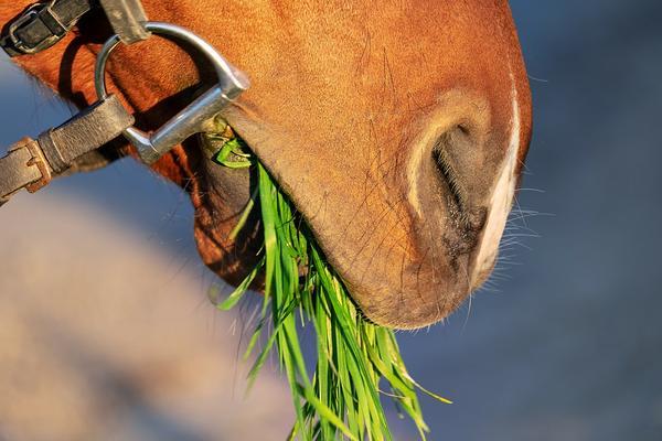zbożowe smaczki dla koni