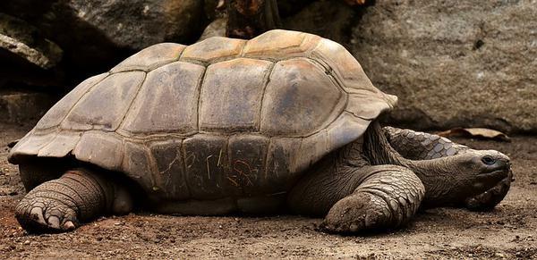 terrarium dla stepowego żółwia