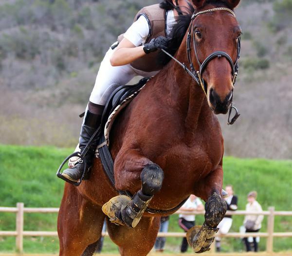 oficerki jeździeckie
